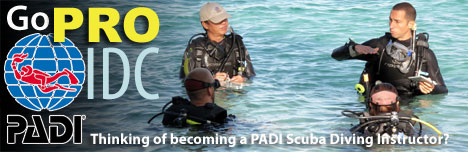 Thinking of Becoming a PADI Instructor? Click to find out more